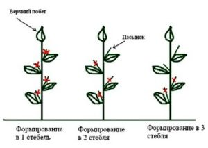 Схема пасынкования перца