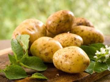 Грибковые болезни картофеля