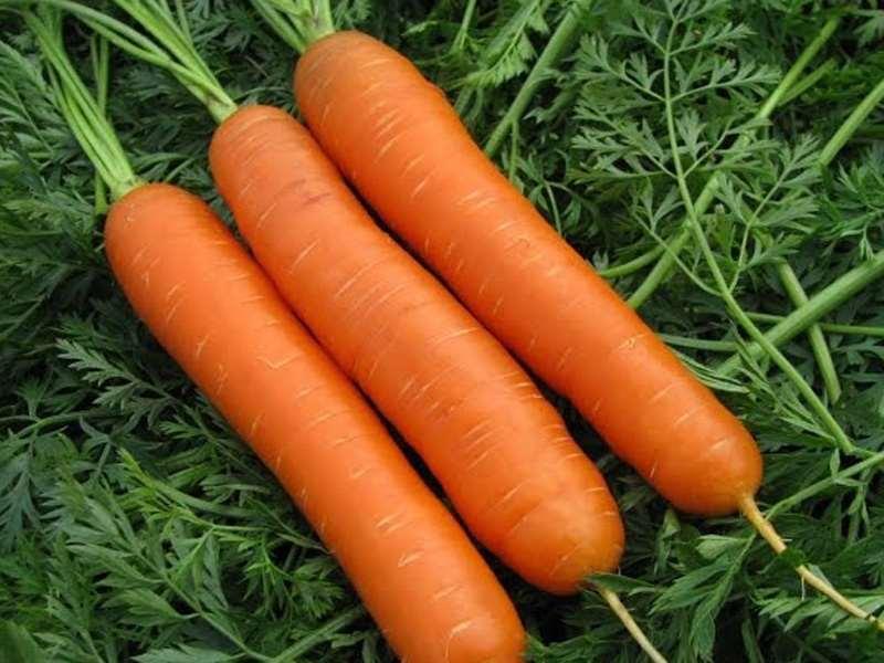 Нандрин морковь