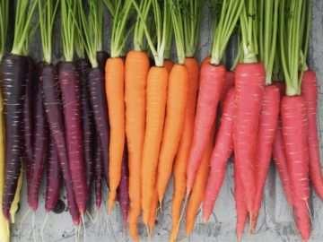 Как сеять морковку