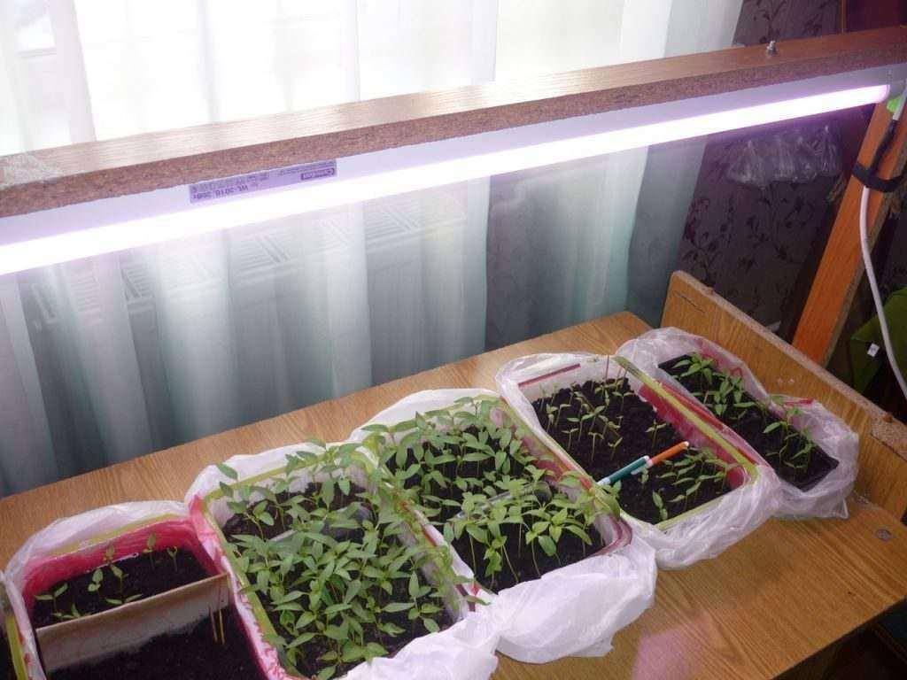 подсветка семян