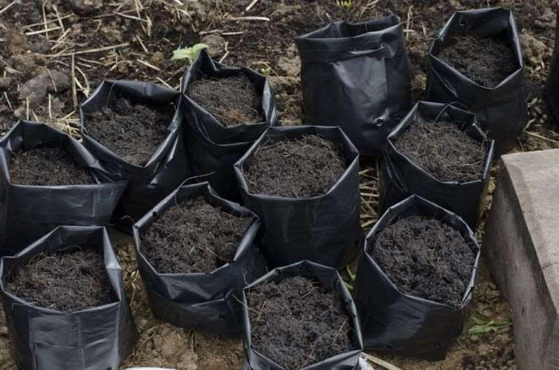 хранение почвы для рассады