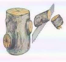 Как омолодить старую яблоню: правила и схемы обрезки. Как омолодить старую яблоню: схема обрезки, подкормка. Как ухаживать за старой яблоней